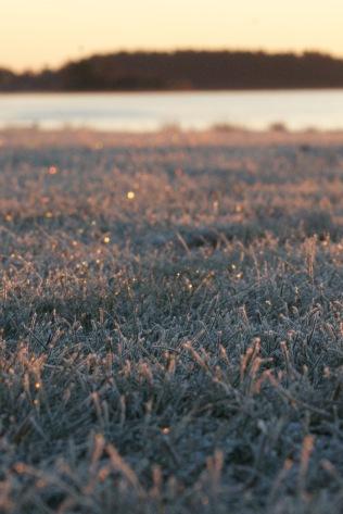 Gräset börjar glittra...